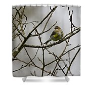 A Yellow-rumped Warbler In The Evening Shower Curtain