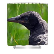 A Young Crow Shower Curtain