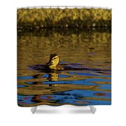 A Young Duckling Shower Curtain