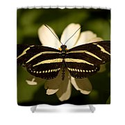 A Zebra-winged Butterfly At The Lincoln Shower Curtain