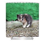 Abandoned Kitten On The Street Shower Curtain