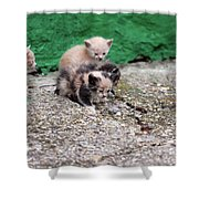 Abandoned Kittens On The Street Shower Curtain