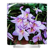 Abbey Flowers Shower Curtain