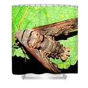 Abbotts Sphinx Moth Shower Curtain