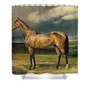 Abdul Medschid The Chestnut Arab Horse Shower Curtain