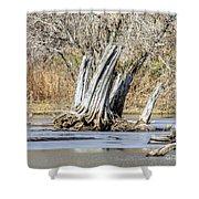 Aboriginal Stumps Shower Curtain