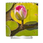About To Bloom Shower Curtain