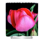 Just About To Bloom Shower Curtain