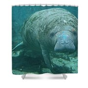 About To Meet A Manatee Shower Curtain
