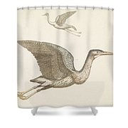 Above A Flying Crane And Beneath A Flying Pelican, Anonymous, 1688 - 1698 Shower Curtain