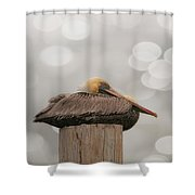 Above It All - Brown Pelican Shower Curtain