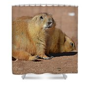 Absolutely Adorable Prairie Dog With  A Friend Shower Curtain