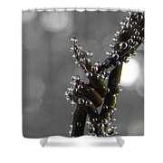 Abstract 014 Shower Curtain