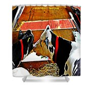 Abstract Cows Shower Curtain