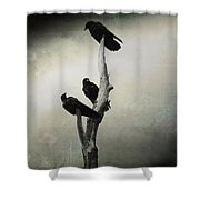 Abstract Crows In A Tree Shower Curtain