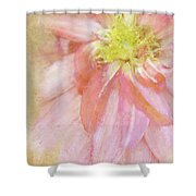 Abstract Dahlia In Pink Shower Curtain