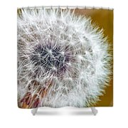 Abstract Dandy Lion On - Orange Shower Curtain