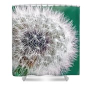 Abstract Dandy Lion - Teal Shower Curtain