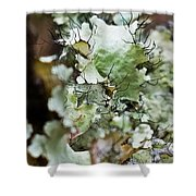 Abstract Flora 1 Shower Curtain