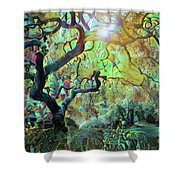 Abstract Japanese Maple Tree 3 Shower Curtain