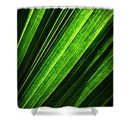 Abstract Of Green Leaf Of Exotic Palm Tree Shower Curtain