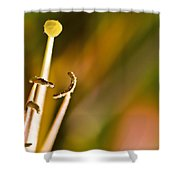 Abstract Of Nature Shower Curtain