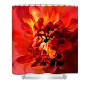 Abstract Red Chrysanthemum Shower Curtain