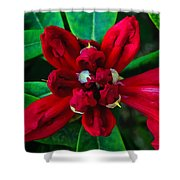 Abstract Rhoddy Bloom Shower Curtain