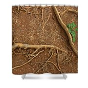 Abstract Roots Shower Curtain