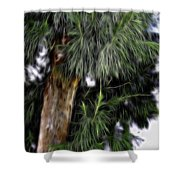 Abstract Tree 8 Shower Curtain