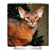 Abyssinian Cat In Christmas Tree Background Shower Curtain