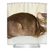 Abyssinian Cat On Chair Pillow, Symbol Of Comfort Shower Curtain