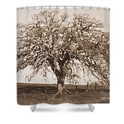 Acacia Tree In Sepia Shower Curtain