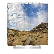 Acacia Tree In The Desert Shower Curtain