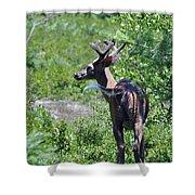 Acadia Buck 2 Shower Curtain