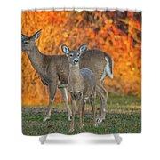 Acadia Deer Shower Curtain
