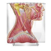 Accessory Nerve View Showing Neck Shower Curtain