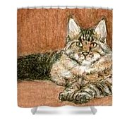 Aceo Maine Coon Cat Shower Curtain