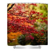 Acer Colors Shower Curtain