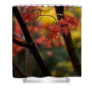 Acer Finish Shower Curtain