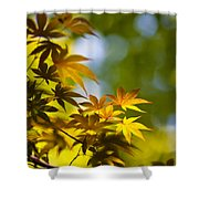 Acer Glow Shower Curtain