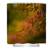 Acer Jewels Shower Curtain
