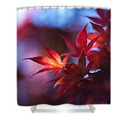 Acer Kaleidoscope Shower Curtain