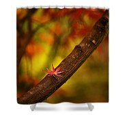 Acer Resting Shower Curtain
