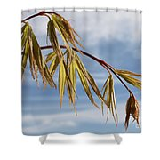 Acer Shower Curtain