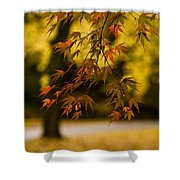 Acers Turning Shower Curtain