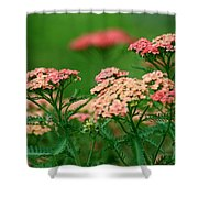 Achillae's Heel Shower Curtain
