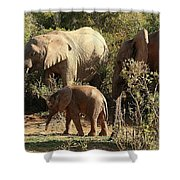 Addo Elephant Family Shower Curtain
