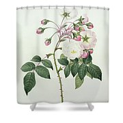 Adelia Aurelianensis Shower Curtain