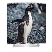 Adelie Penguin Squawking On Grey Shingle Beach Shower Curtain